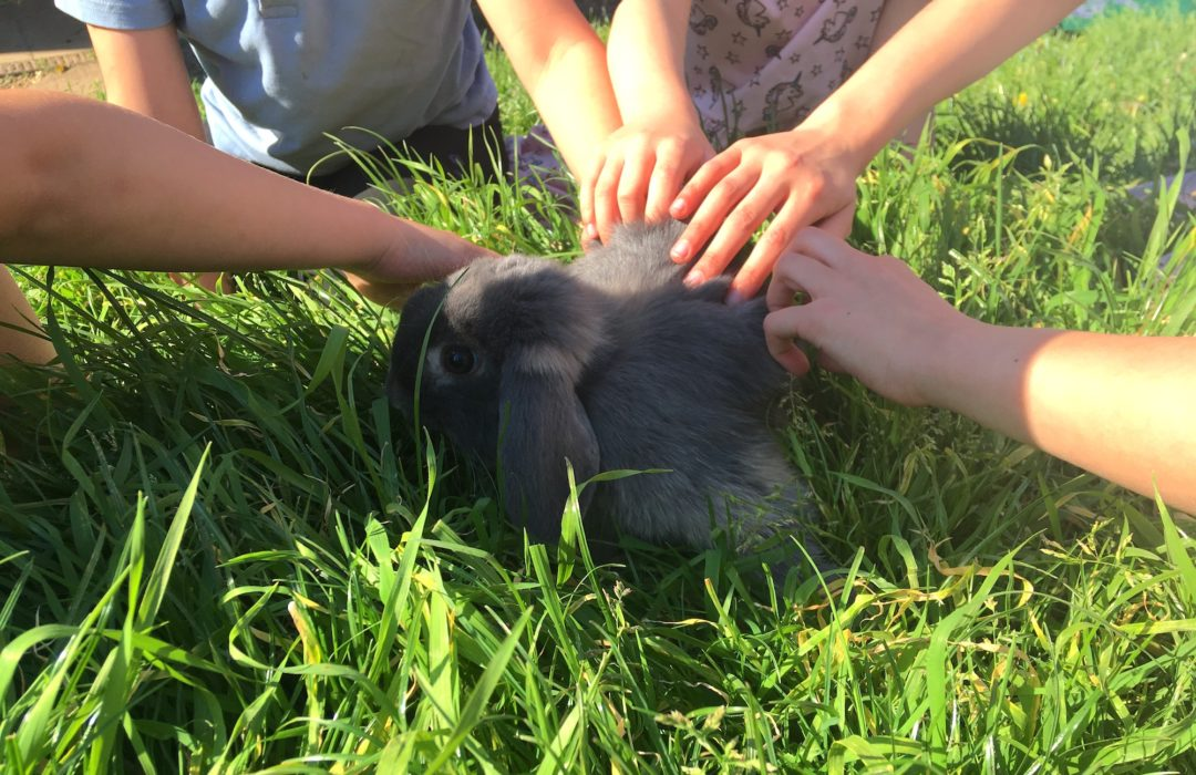 children stroking rabbit